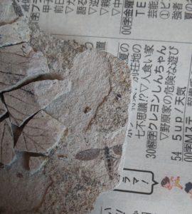 出た!!ホンモノの化石