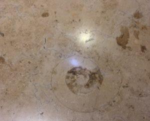 身近な化石