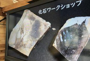 化石ワークショップ