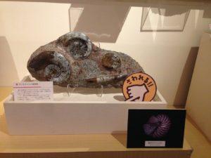 化石見学に…(2)触れる化石